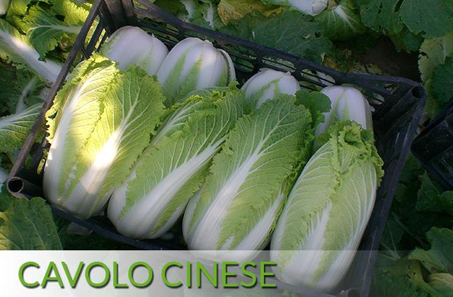 Cavolo Cinese
