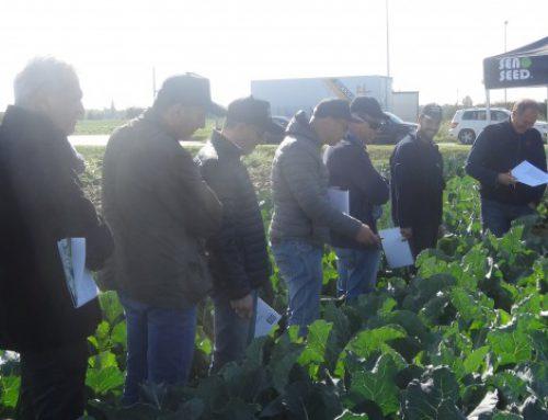 Brassiche Day Seno Seed – Padova 21 Ottobre 2015