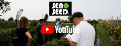 seno seed canale youtube