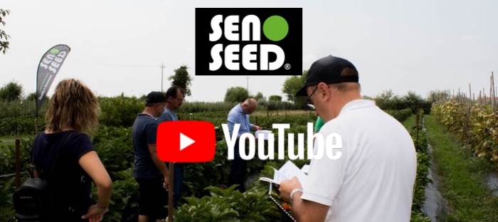 seno seed canale youtube